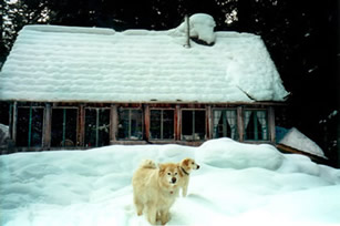 Cabin and dogs