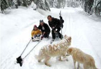 Dog Sled Cross Country Ski Cabin Trail